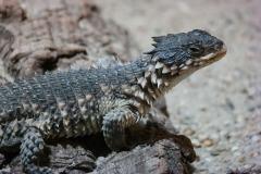 lizard-2525097