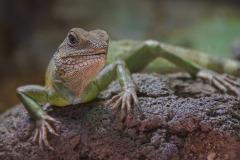 lizard-4104823
